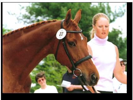 al-nexttohorse